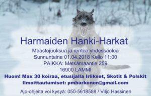 Harmaiden hanki-harkat 1.4. Lammilla